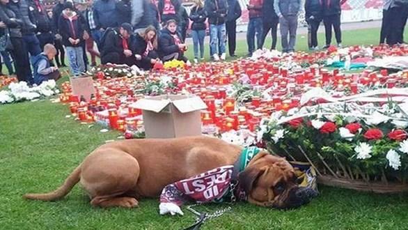 la-conmovedora-imagen-de-un-perro-en-el-funeral-de-un-futbolista