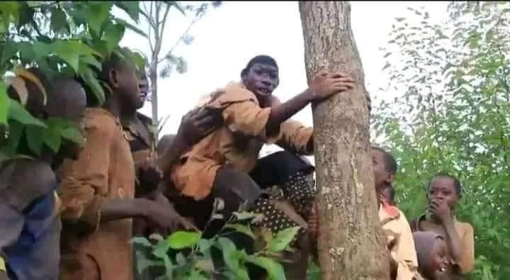 Zanzimana Ellie Tarzan from Africa